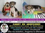 candy cachorra en adopcion