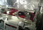 oreo en la incubadora recien operada