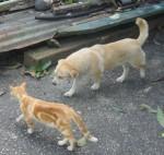 gatica perra