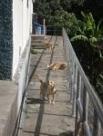 perritos 3