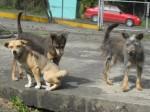 perritos 4