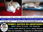 tommy gatico en adopcion
