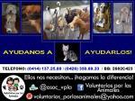 JORNADA #15 DE ESTERILIZACION Y DONATIVOS DE ANIMALITOS!!!!! via @asoc_vpla