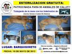 ESTERILIZAMOS GRATIS A 90 ANIMALES DE CALLE EN BARQUISIMETO GRACIAS A SUS DONATIVOS!!!!! via @asoc_vpla