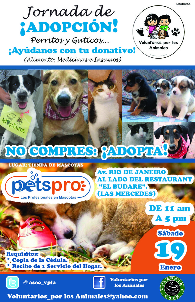 Jornada_de_adopcion_-_19